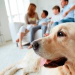 Criar animais de estimação em casa faz toda a diferença!