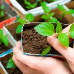 5 dicas para montar uma horta e os benefícios dessa prática
