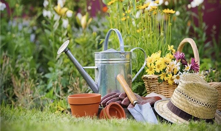 Dicas para criação e cultivo de jardins