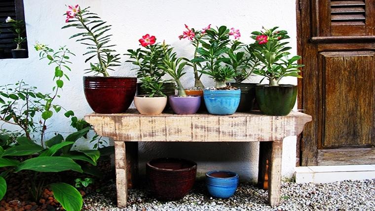 Chegou a primavera: flores e plantas para cultivar dentro de casa