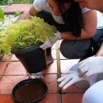 Cuide de sua casa contra a proliferação do Aedes aegypt