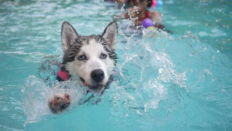 Ter ou não ter uma piscina em casa? Saiba as vantagens e desvantagens