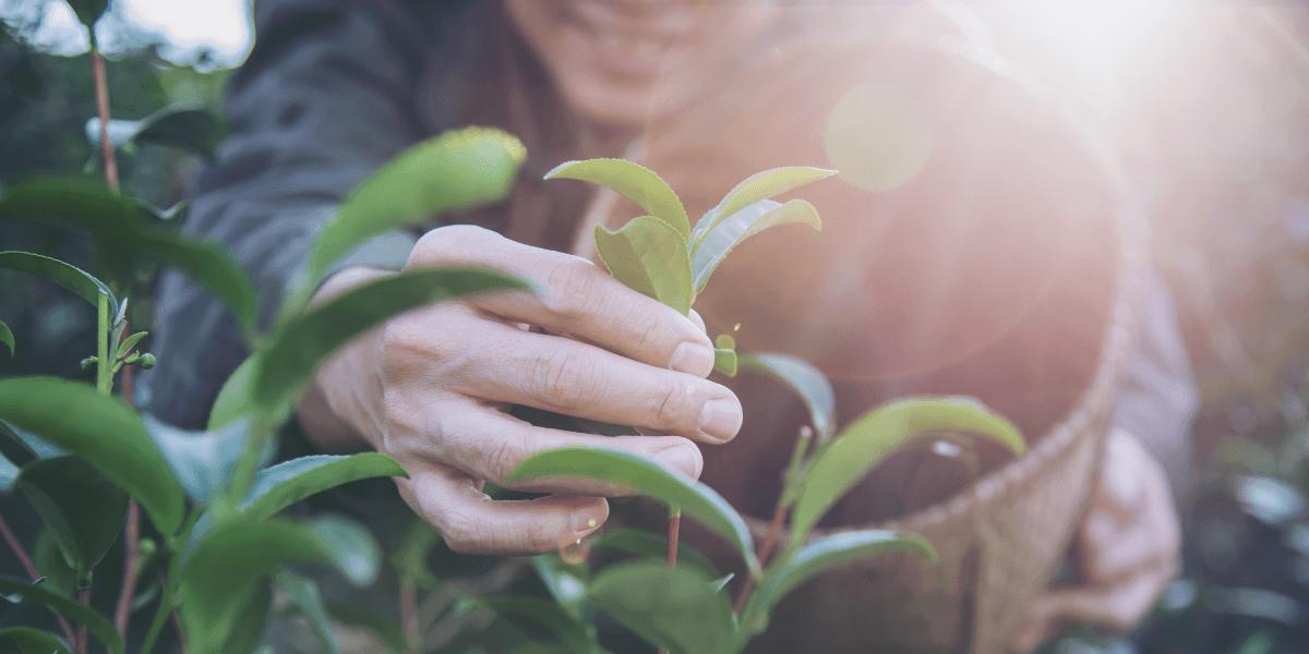 5 dicas para criar a sua horta no jardim ou no quintal